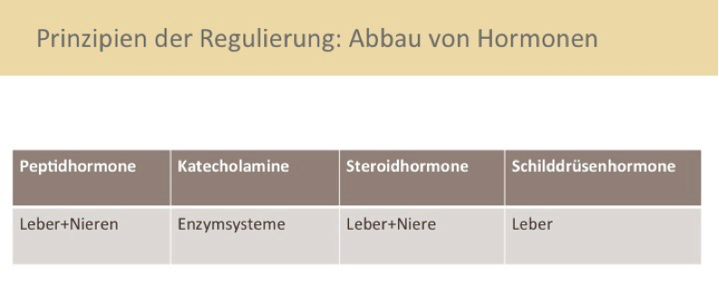 abbau-hormone